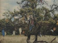 The Apple Tree